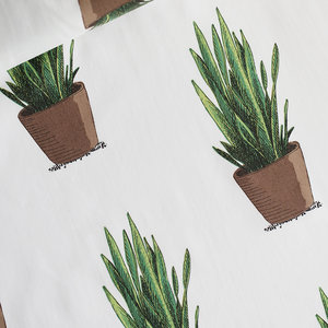 Sansevieria - cotton lawn